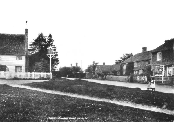 Cousley Wood - 1903