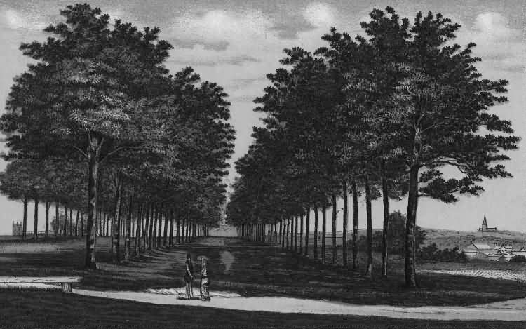 Queens Grove, The Common - 1889