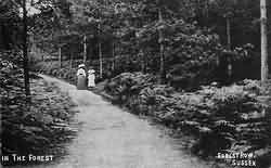 The forest near Forest Row in 1908